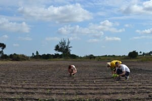 SERVE volunteers busily planting lettuce seedlings for the newly installed drip irrigation at Young Africa Agritech in Dondo, Mozambique