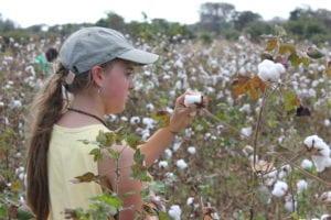 Leila picking cotton at Luanda Farm